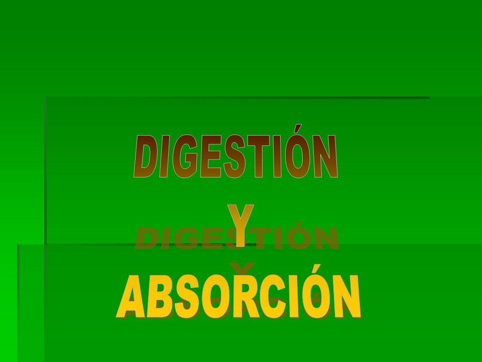 DIGESTIÓN Y ABSORCIÓN