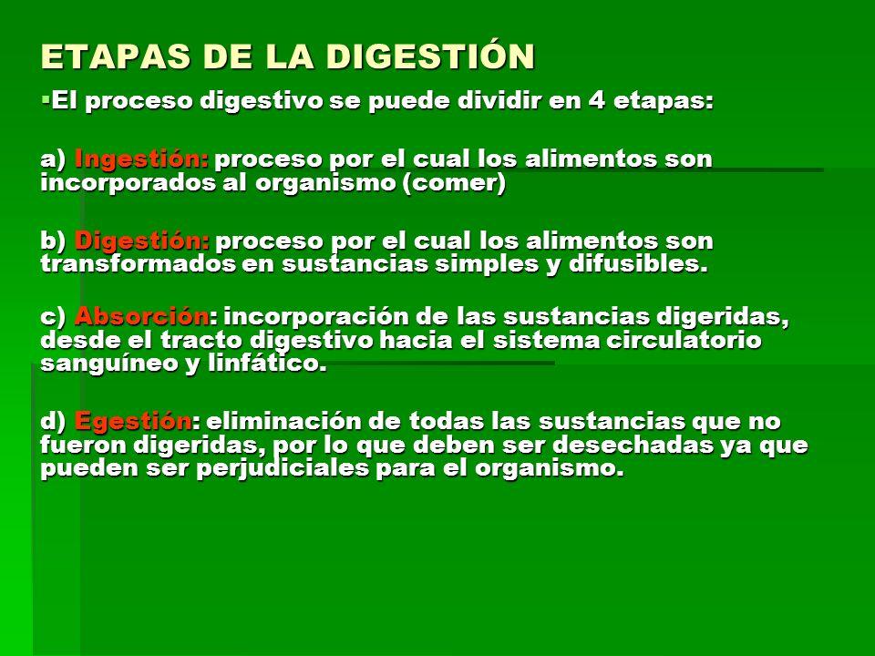 ETAPAS DE LA DIGESTIÓNEl proceso digestivo se puede dividir en 4 etapas: