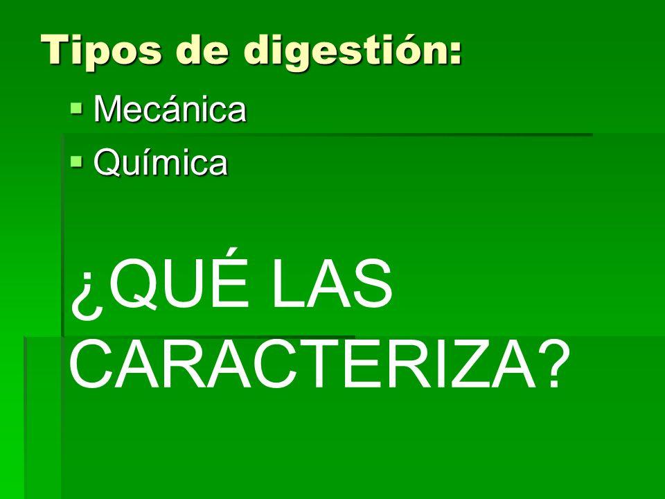 Tipos de digestión: Mecánica Química ¿QUÉ LAS CARACTERIZA