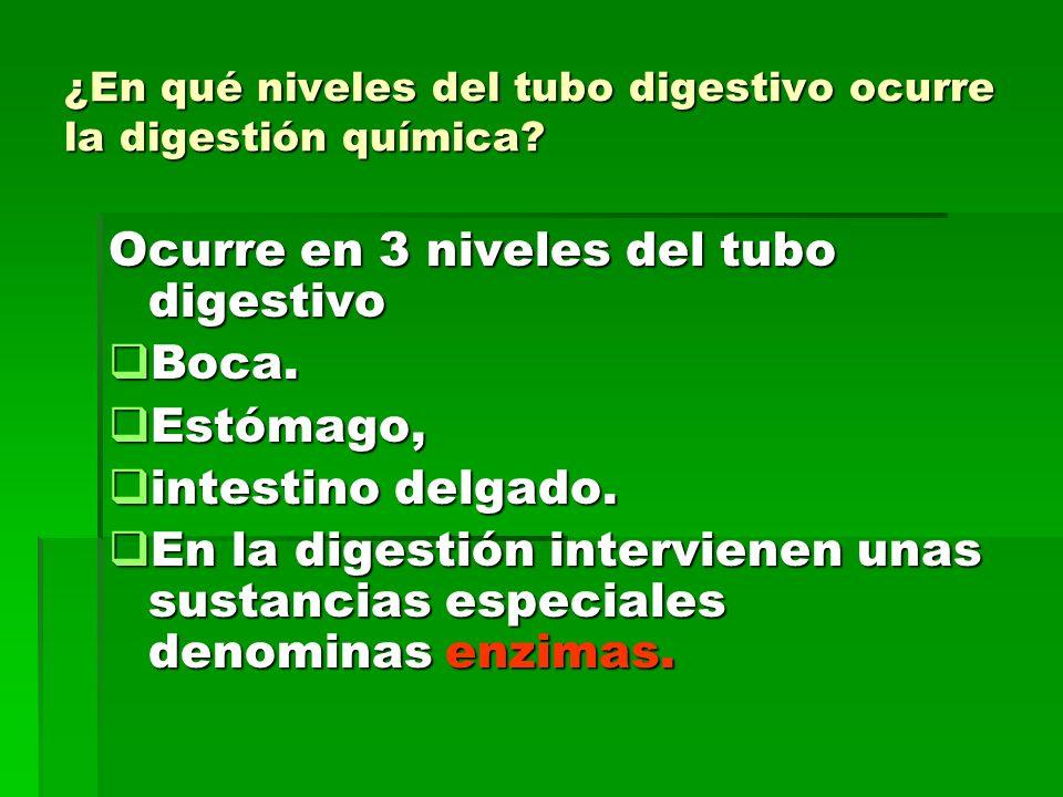¿En qué niveles del tubo digestivo ocurre la digestión química