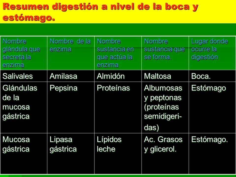 Resumen digestión a nivel de la boca y estómago.