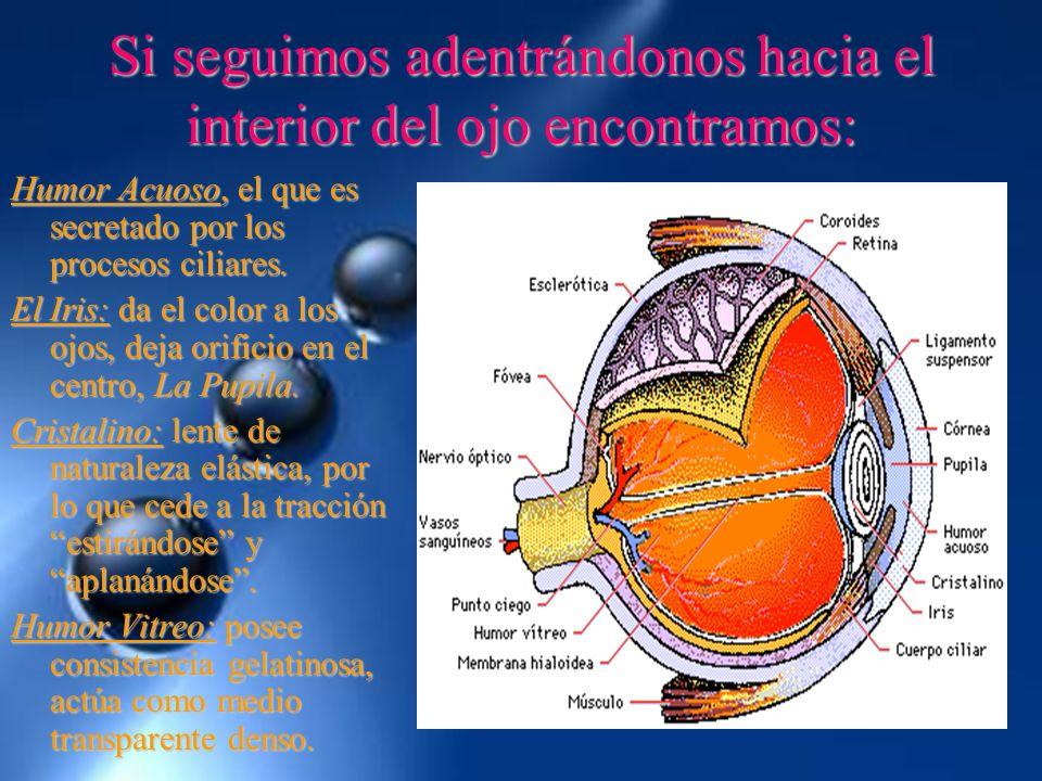 Si seguimos adentrándonos hacia el interior del ojo encontramos: