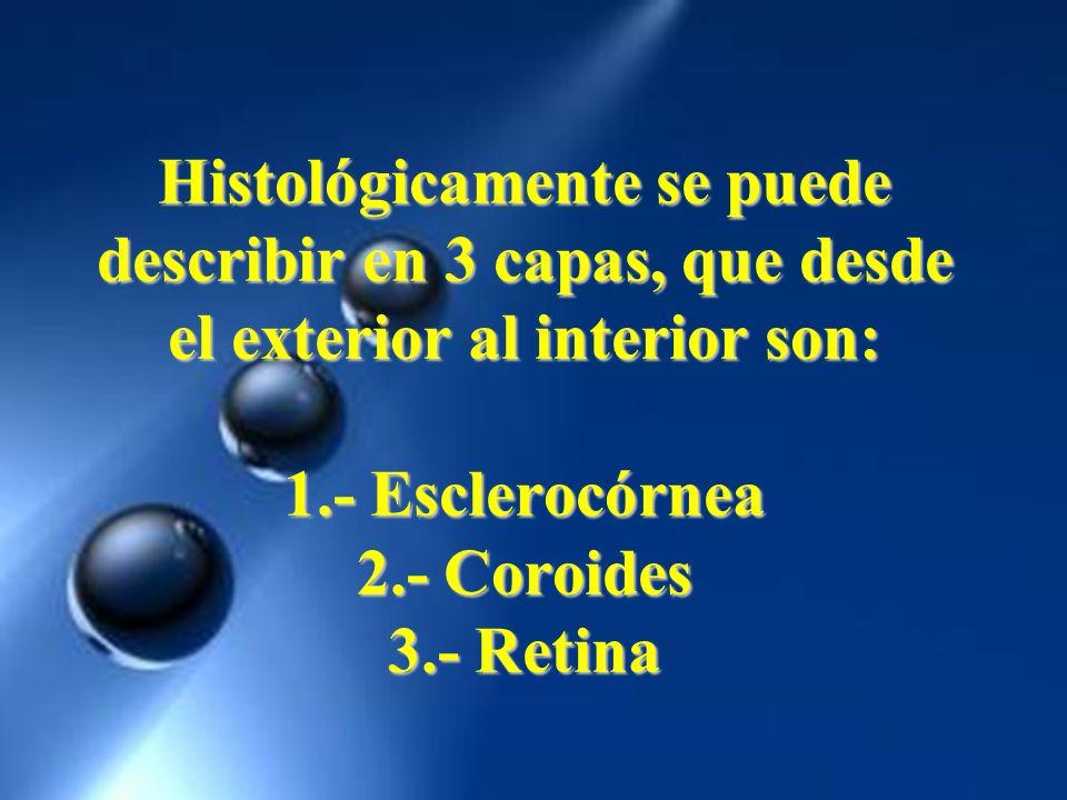 Histológicamente se puede describir en 3 capas, que desde el exterior al interior son: 1.- Esclerocórnea 2.- Coroides 3.- Retina