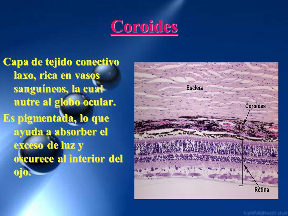 CoroidesCapa de tejido conectivo laxo, rica en vasos sanguíneos, la cual nutre al globo ocular.