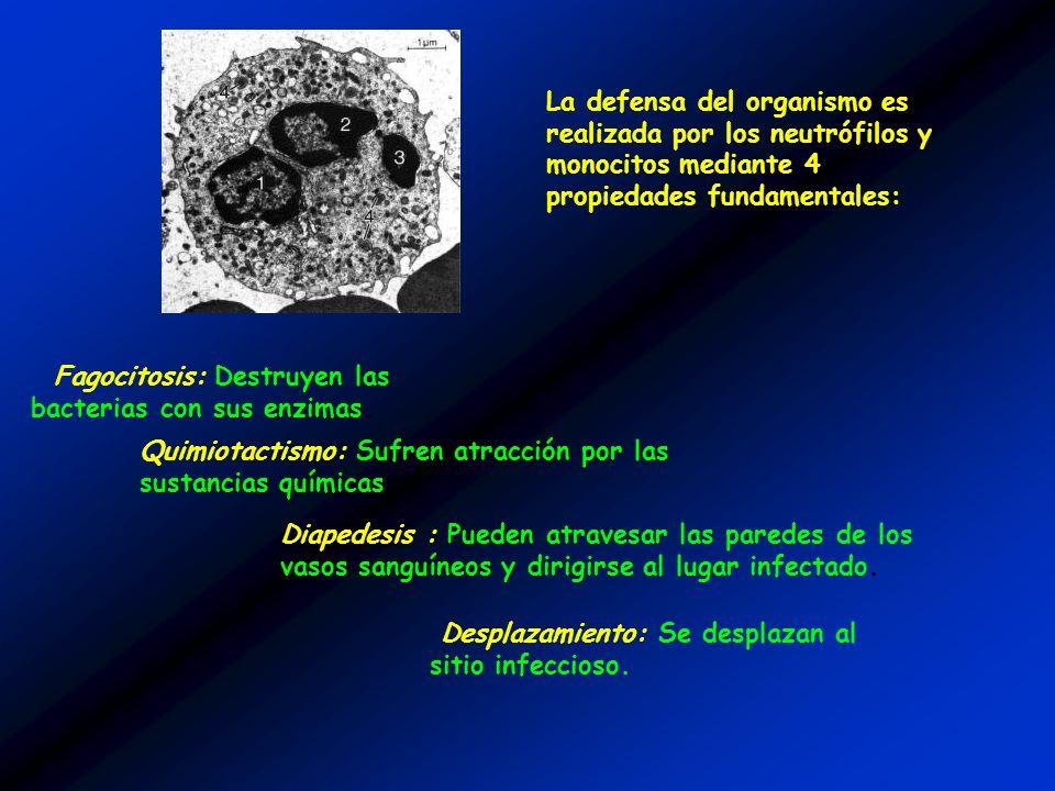 La defensa del organismo es realizada por los neutrófilos y monocitos mediante 4 propiedades fundamentales: