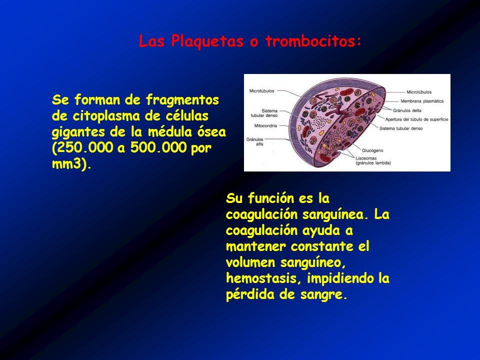 Las Plaquetas o trombocitos:
