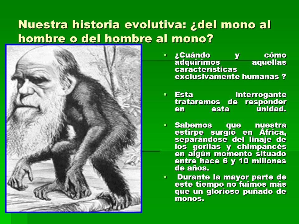Nuestra historia evolutiva: ¿del mono al hombre o del hombre al mono
