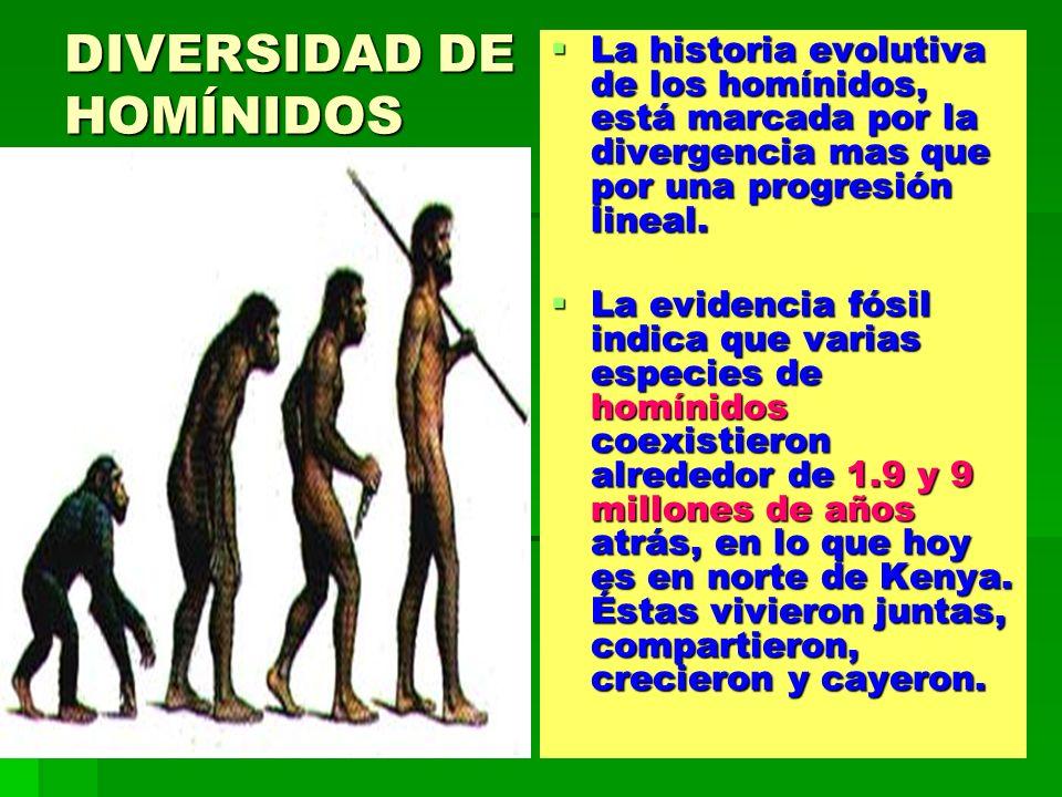 DIVERSIDAD DE HOMÍNIDOS