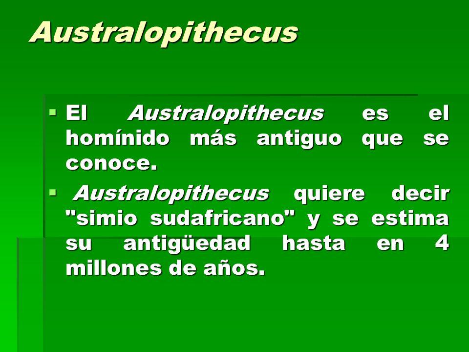 Australopithecus El Australopithecus es el homínido más antiguo que se conoce.