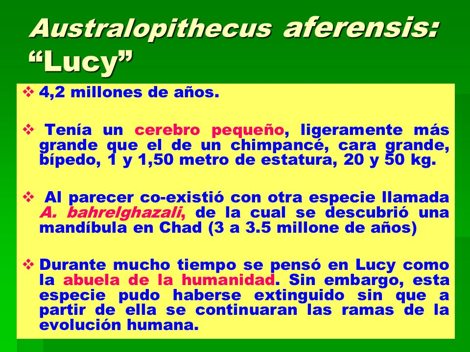 Australopithecus aferensis: Lucy