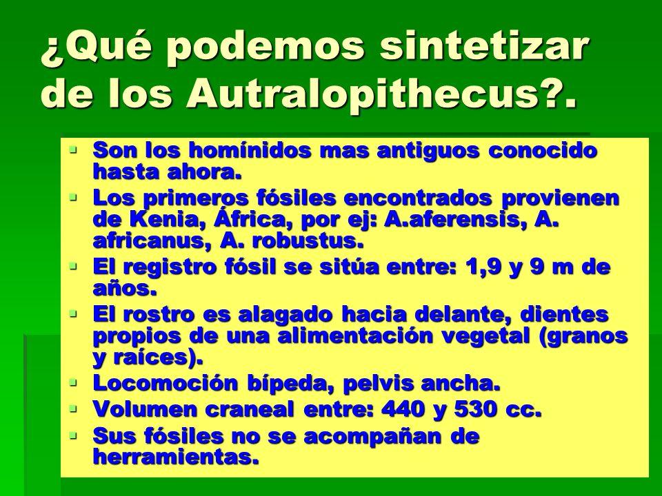 ¿Qué podemos sintetizar de los Autralopithecus .