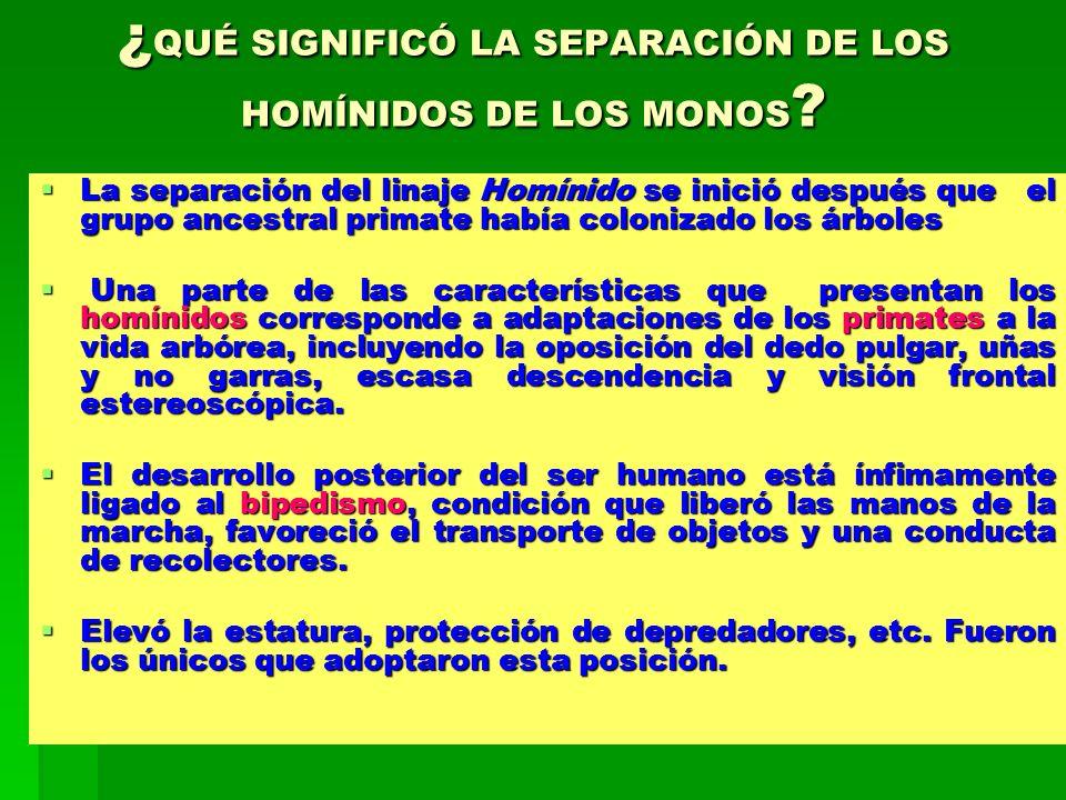 ¿QUÉ SIGNIFICÓ LA SEPARACIÓN DE LOS HOMÍNIDOS DE LOS MONOS