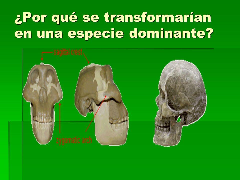¿Por qué se transformarían en una especie dominante
