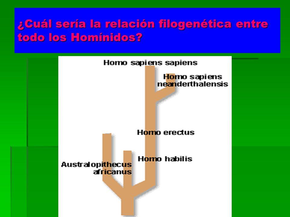 ¿Cuál sería la relación filogenética entre todo los Homínidos