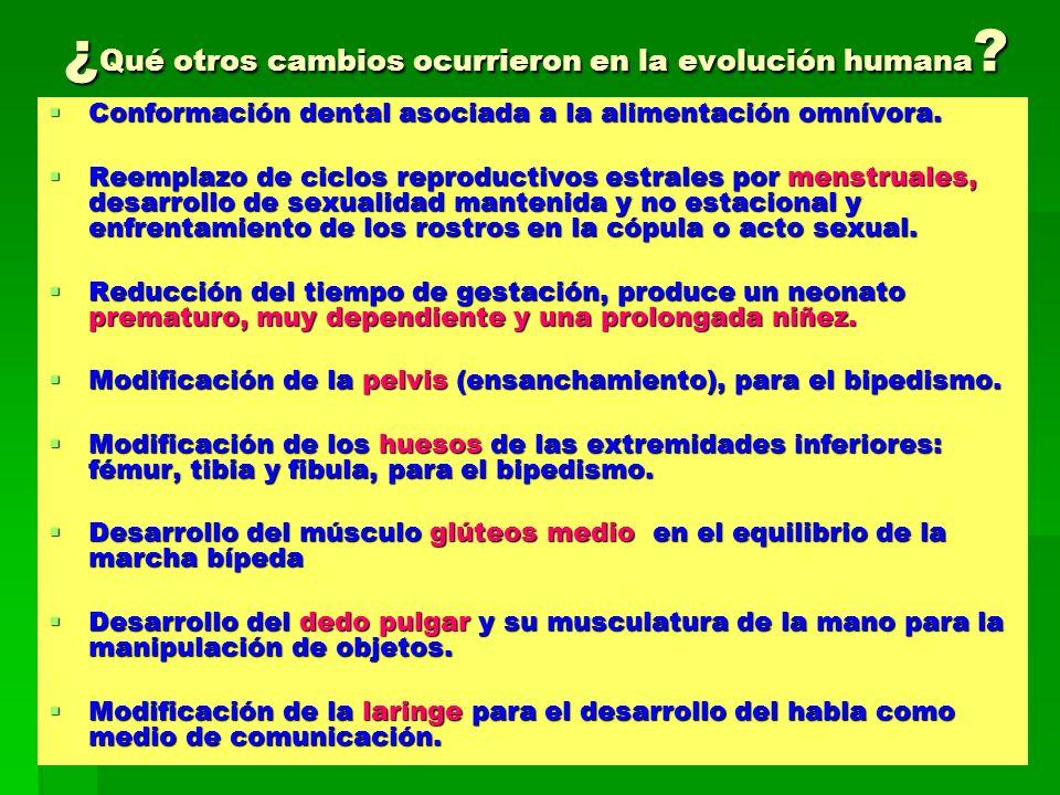 ¿Qué otros cambios ocurrieron en la evolución humana