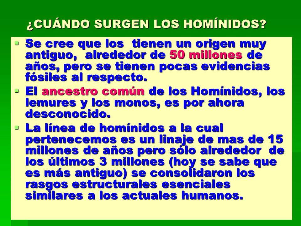 ¿CUÁNDO SURGEN LOS HOMÍNIDOS
