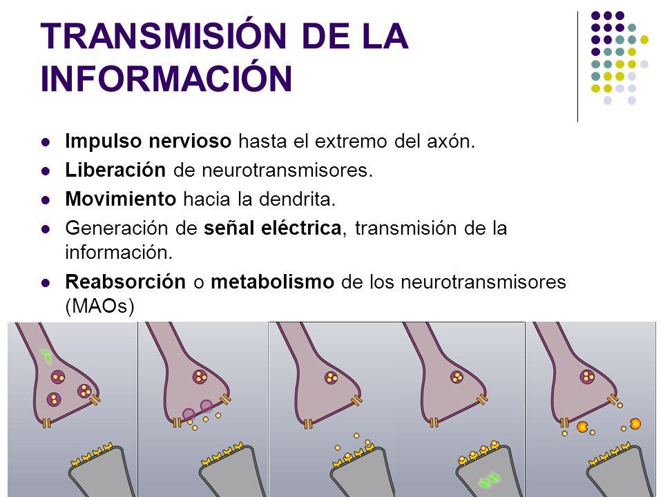 TRANSMISIÓN DE LA INFORMACIÓN