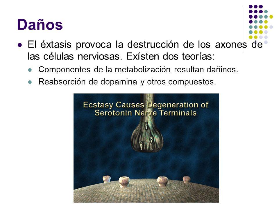Daños El éxtasis provoca la destrucción de los axones de las células nerviosas. Exísten dos teorías: