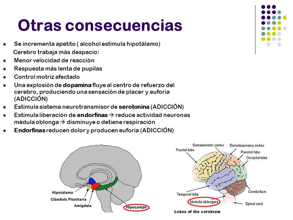Otras consecuencias Se incrementa apetito ( alcohol estimula hipotálamo) Cerebro trabaja más despacio: