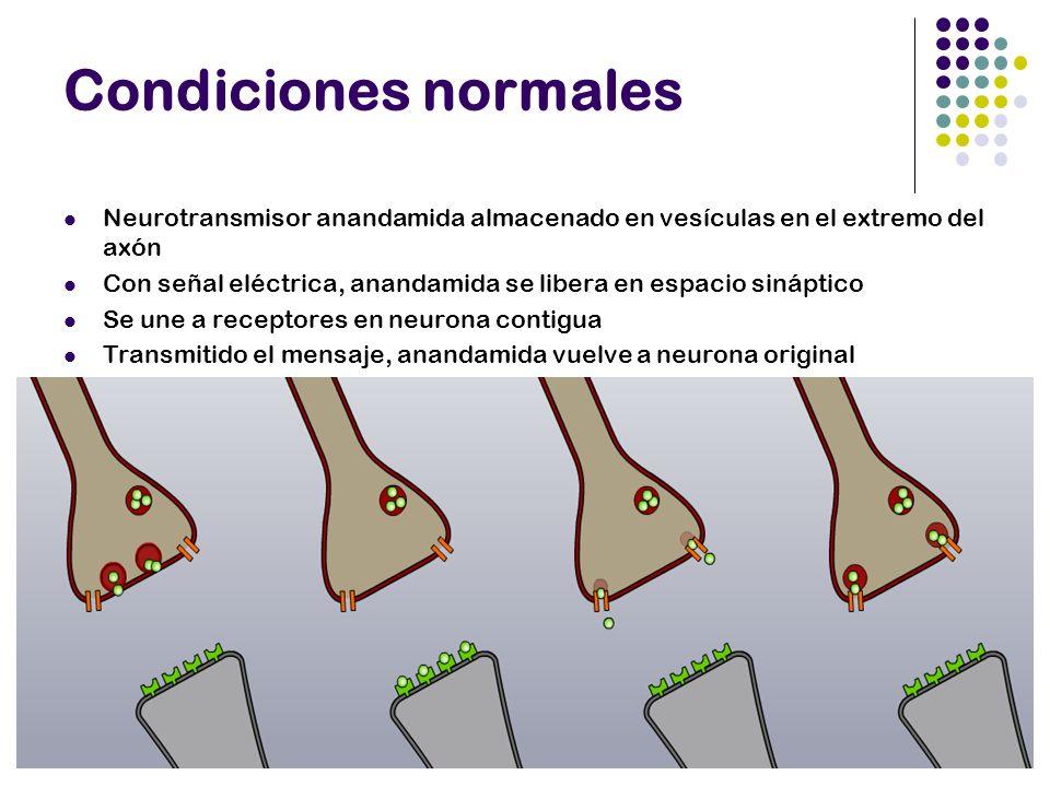 Condiciones normales Neurotransmisor anandamida almacenado en vesículas en el extremo del axón.