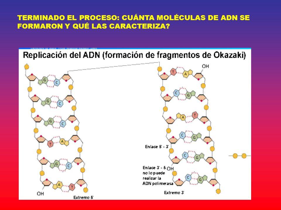 TERMINADO EL PROCESO: CUÁNTA MOLÉCULAS DE ADN SE FORMARON Y QUÉ LAS CARACTERIZA