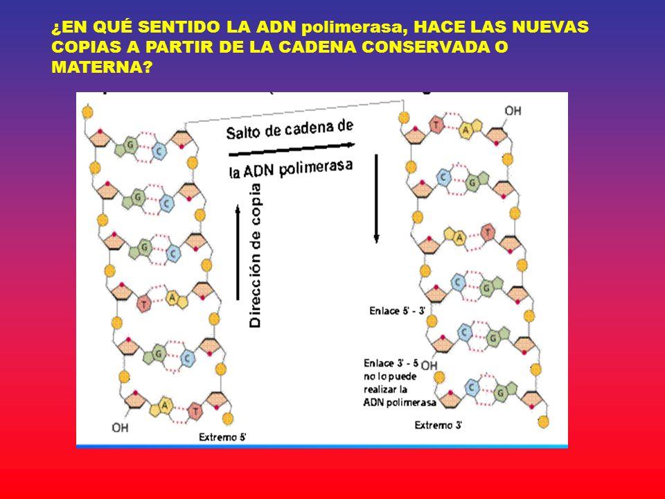 ¿EN QUÉ SENTIDO LA ADN polimerasa, HACE LAS NUEVAS COPIAS A PARTIR DE LA CADENA CONSERVADA O MATERNA