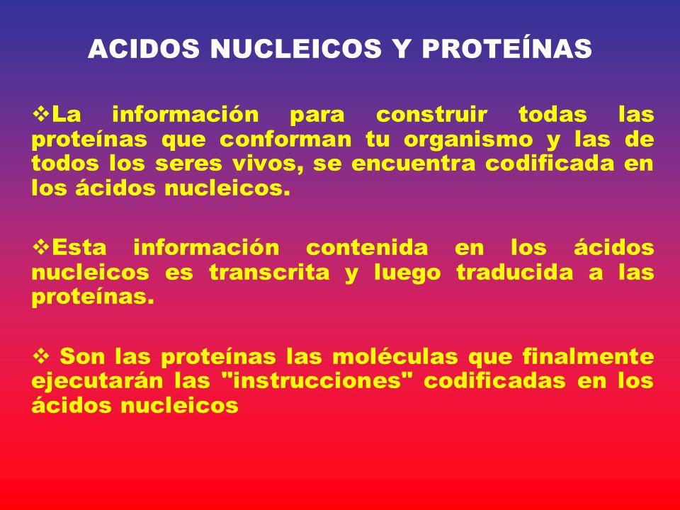 ACIDOS NUCLEICOS Y PROTEÍNAS