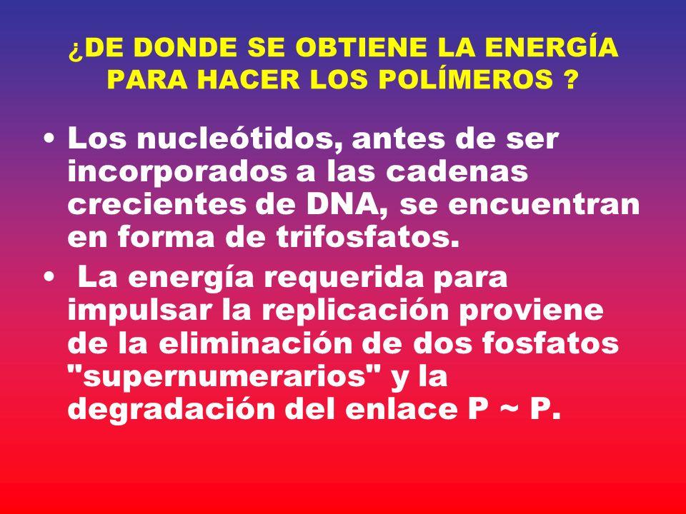 ¿DE DONDE SE OBTIENE LA ENERGÍA PARA HACER LOS POLÍMEROS