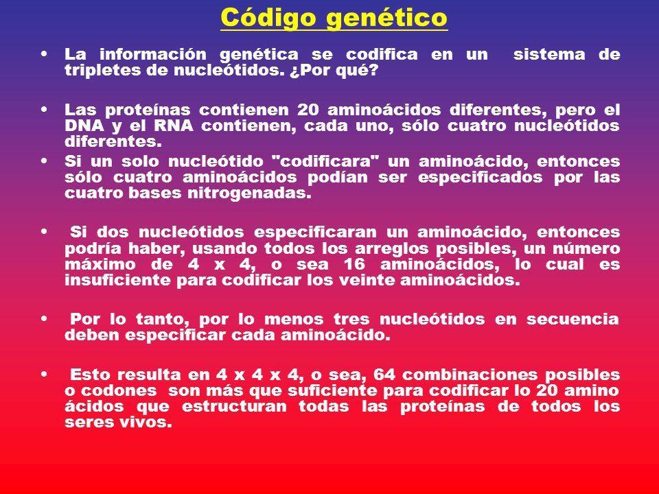 Código genético La información genética se codifica en un sistema de tripletes de nucleótidos. ¿Por qué