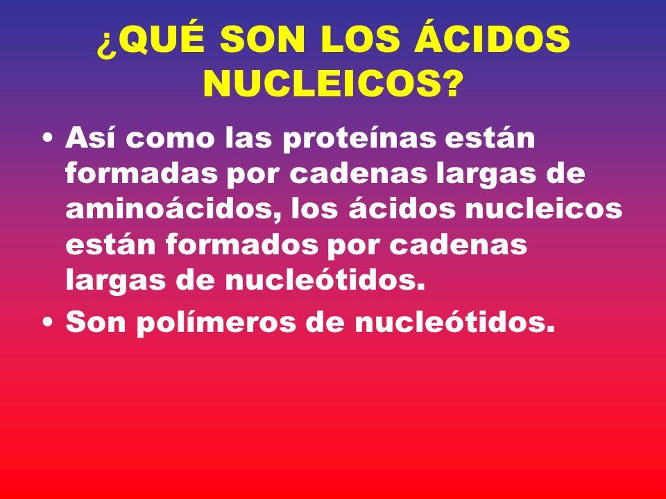 ¿QUÉ SON LOS ÁCIDOS NUCLEICOS