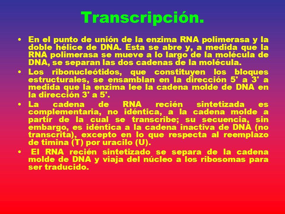 Transcripción.