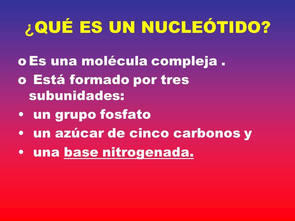 ¿QUÉ ES UN NUCLEÓTIDO Es una molécula compleja .