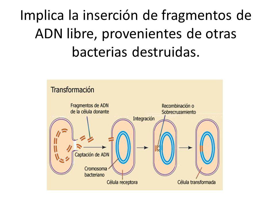 Implica la inserción de fragmentos de ADN libre, provenientes de otras bacterias destruidas.