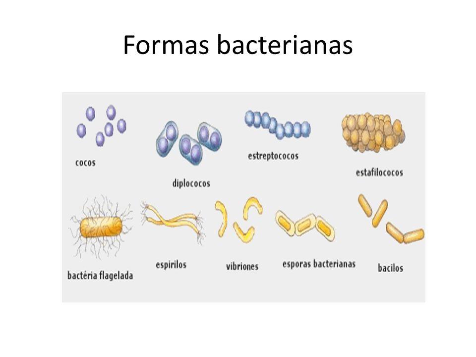 Formas bacterianas