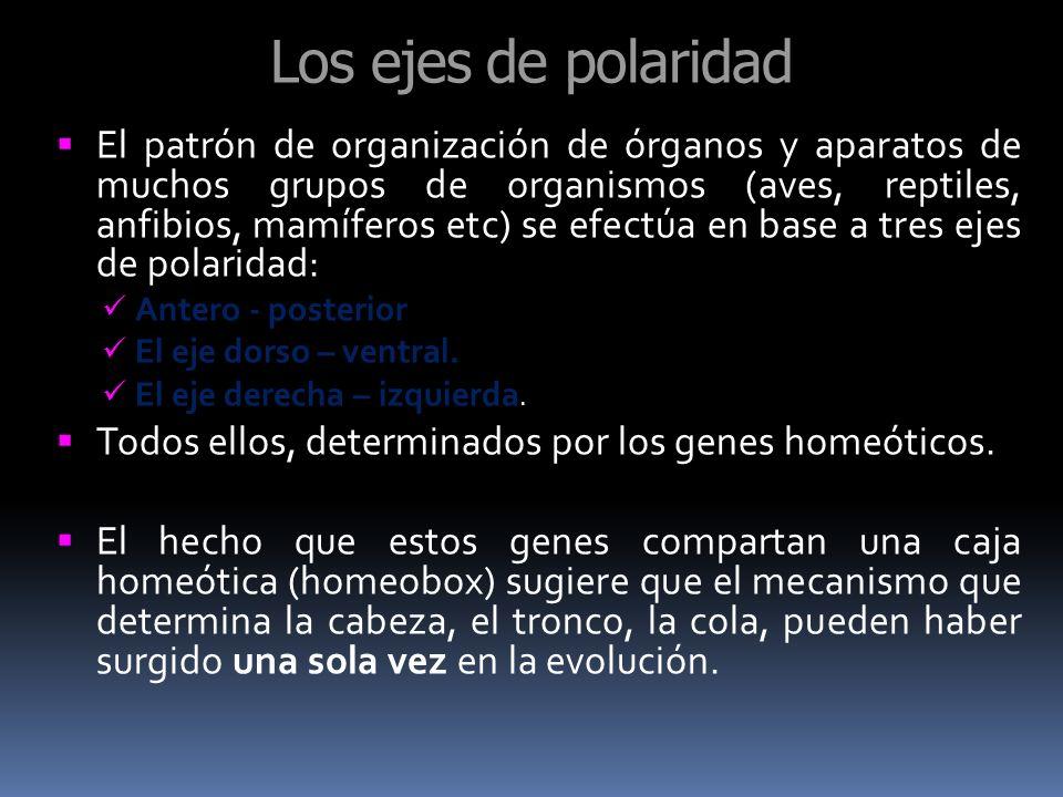 Los ejes de polaridad