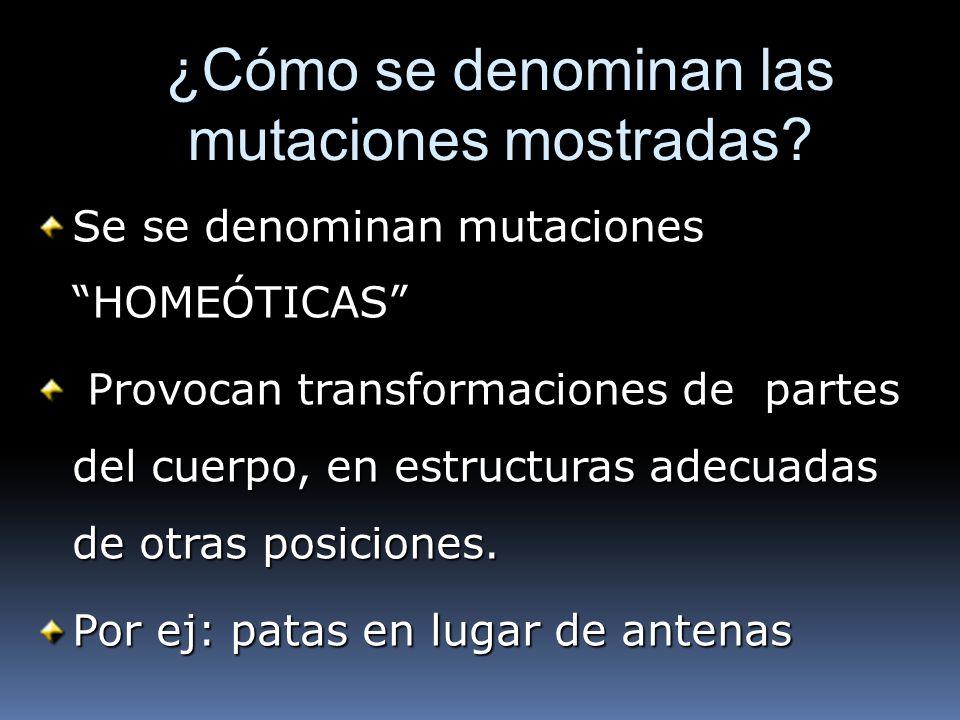 ¿Cómo se denominan las mutaciones mostradas