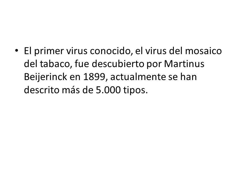 El primer virus conocido, el virus del mosaico del tabaco, fue descubierto por Martinus Beijerinck en 1899, actualmente se han descrito más de 5.000 tipos.