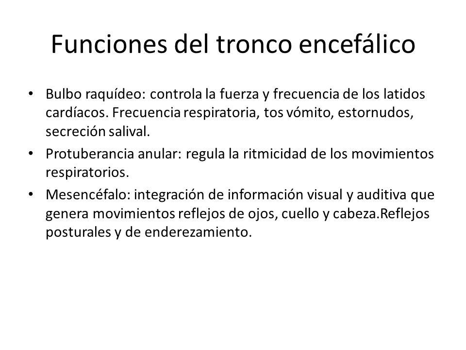 Funciones del tronco encefálico