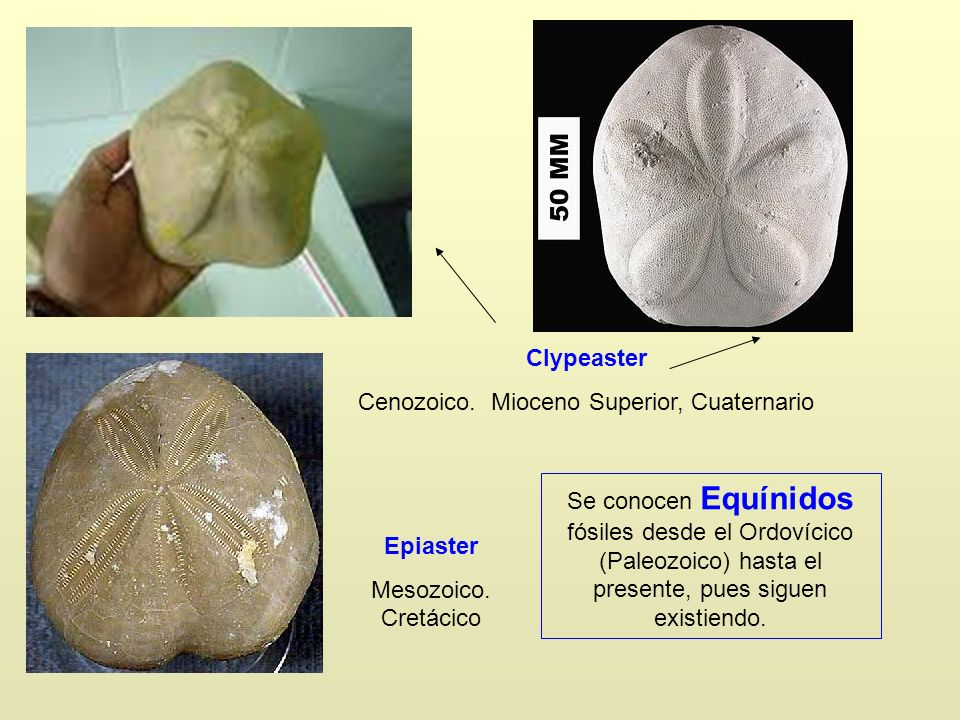Cenozoico. Mioceno Superior, Cuaternario