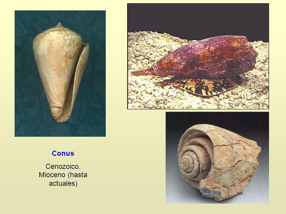 Cenozoico. Mioceno (hasta actuales)