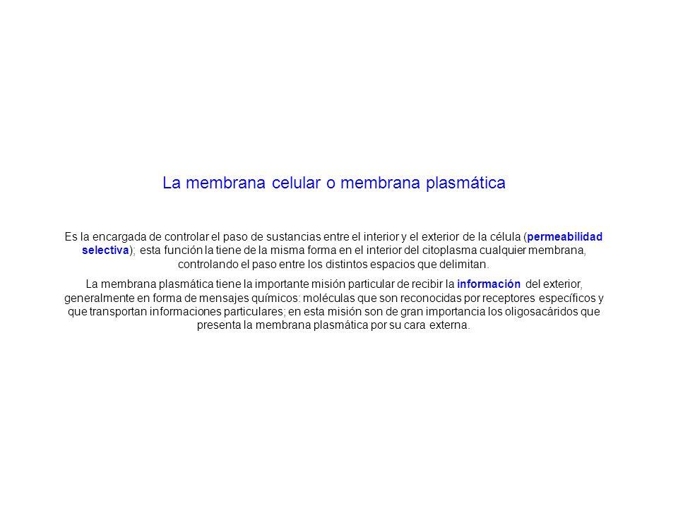 La membrana celular o membrana plasmática