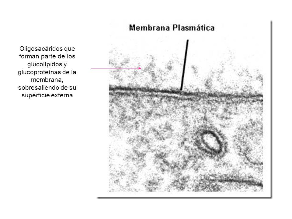 http://biologia. laguia2000