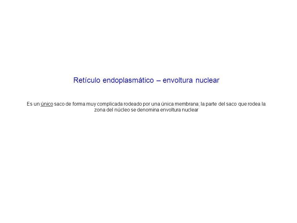 Retículo endoplasmático – envoltura nuclear