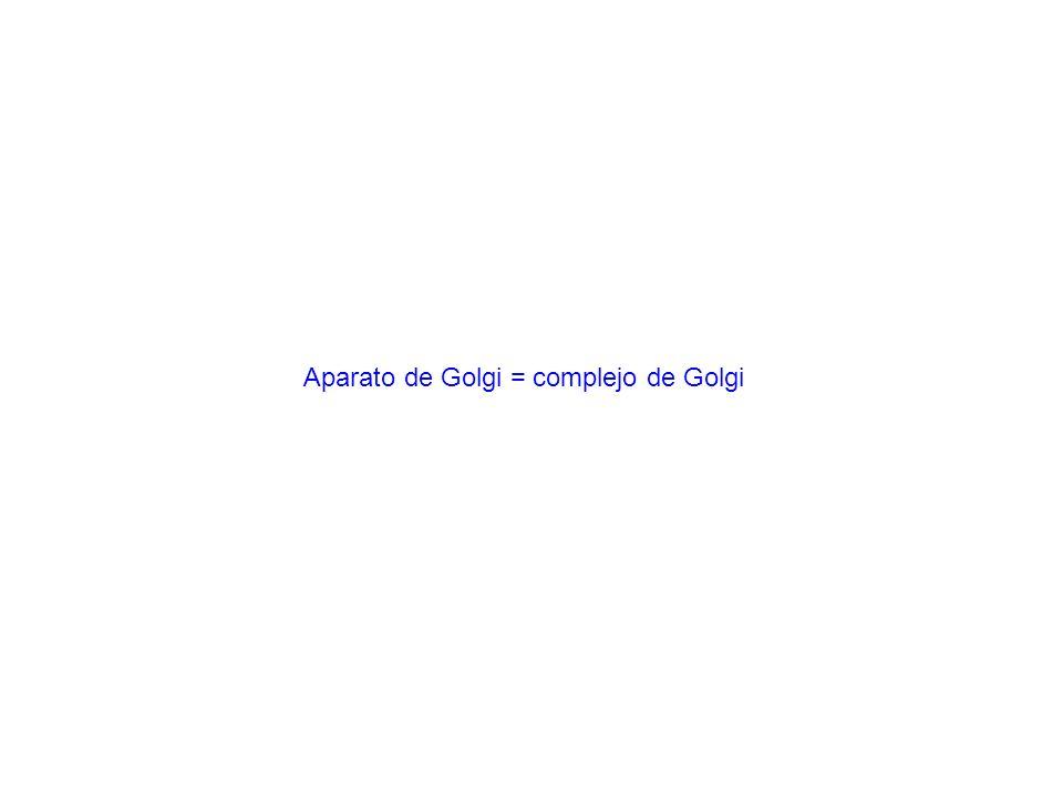 Aparato de Golgi = complejo de Golgi