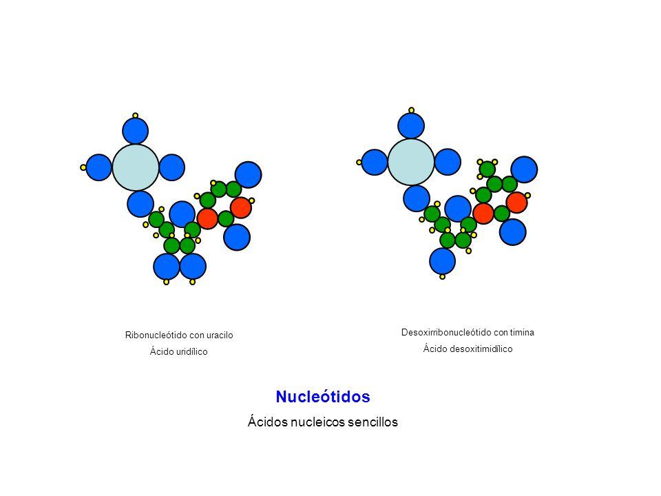 Nucleótidos Ácidos nucleicos sencillos
