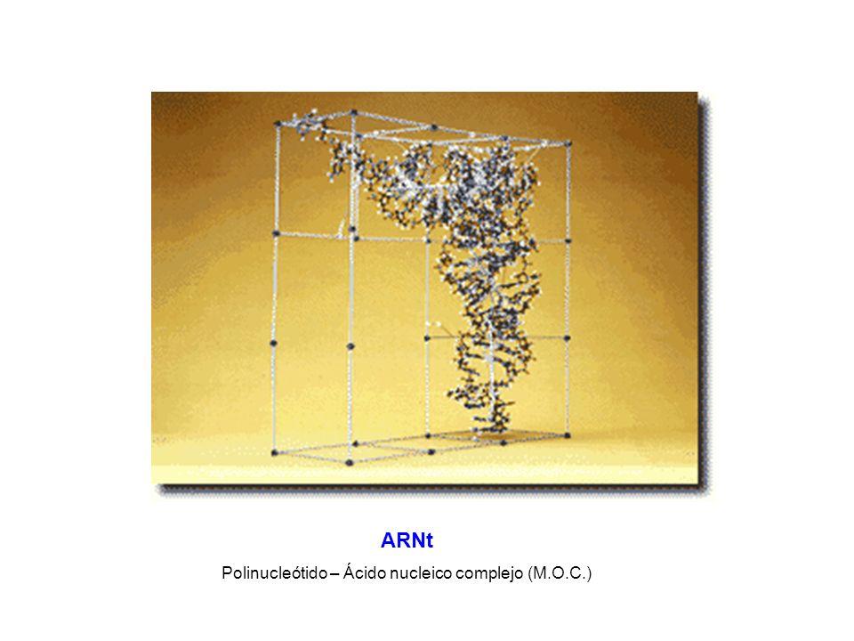 Polinucleótido – Ácido nucleico complejo (M.O.C.)