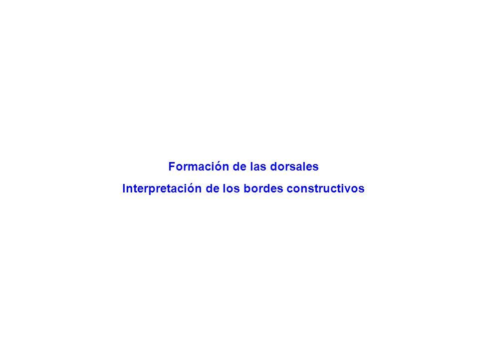 Formación de las dorsales Interpretación de los bordes constructivos