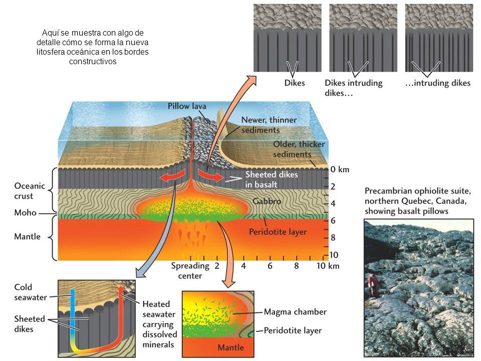 Aquí se muestra con algo de detalle cómo se forma la nueva litosfera oceánica en los bordes constructivos
