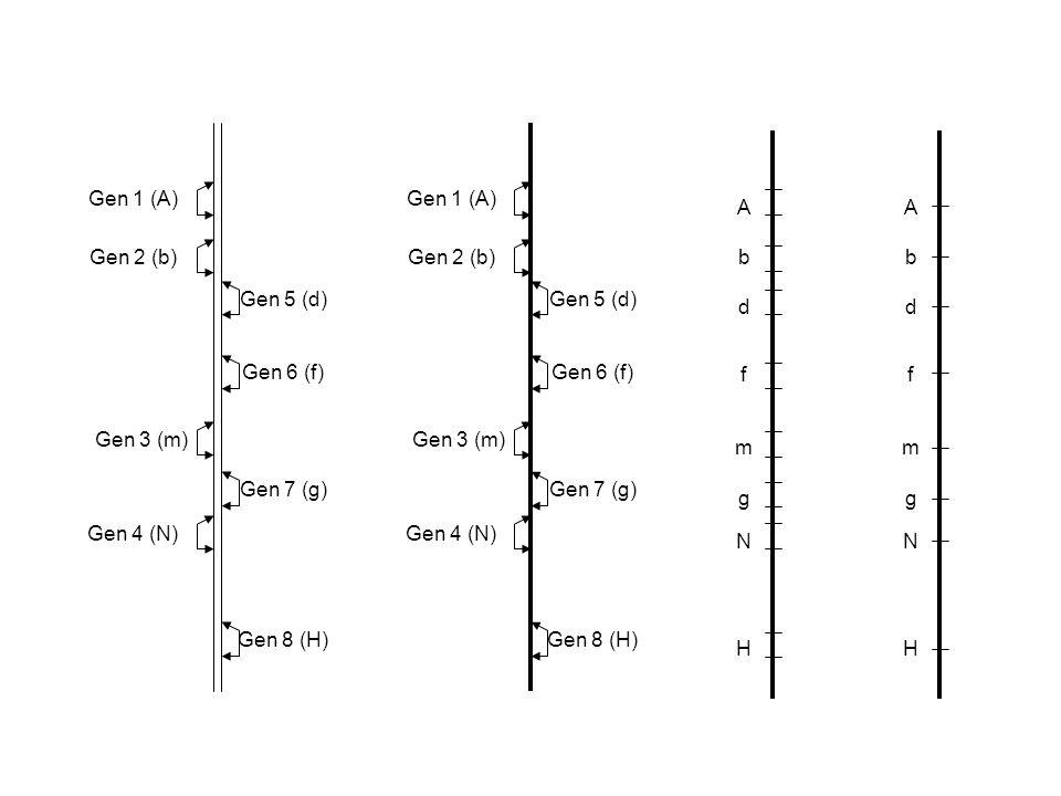 Gen 1 (A) Gen 2 (b) Gen 3 (m) Gen 4 (N) Gen 5 (d) Gen 6 (f) Gen 7 (g) Gen 8 (H) Gen 1 (A) Gen 2 (b)