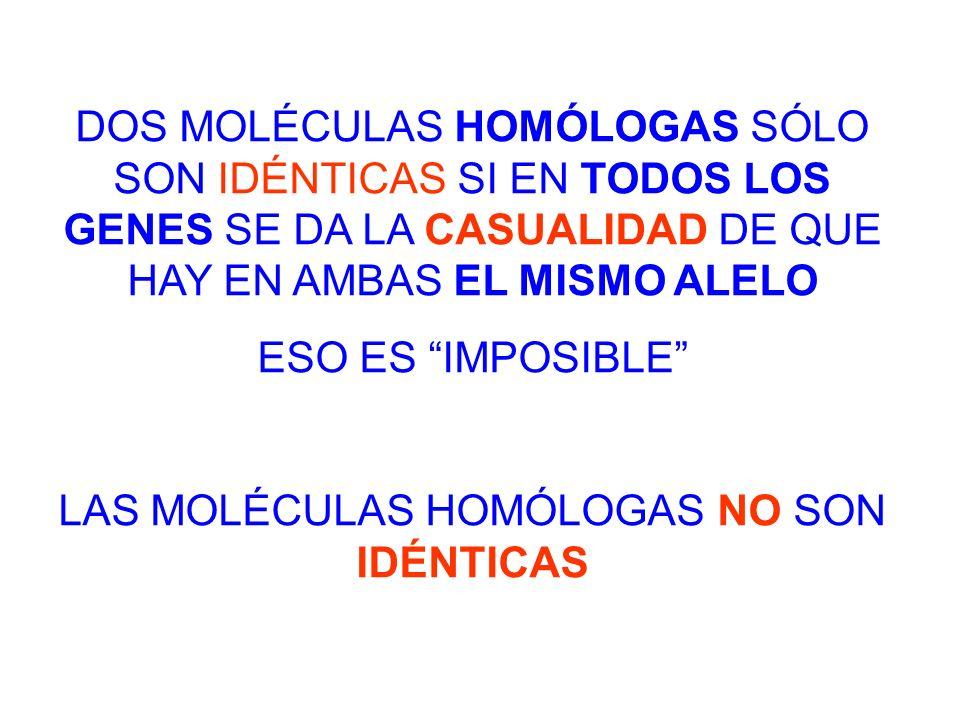 LAS MOLÉCULAS HOMÓLOGAS NO SON IDÉNTICAS